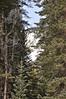 20170218_RMNP - Baker Gulch snowshoeing_020