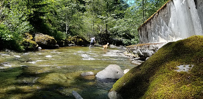 Thor and Ollie playing in the creek with Kirk