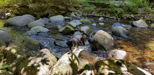 Thor playing in Wash Creek - he really enjoyed the water
