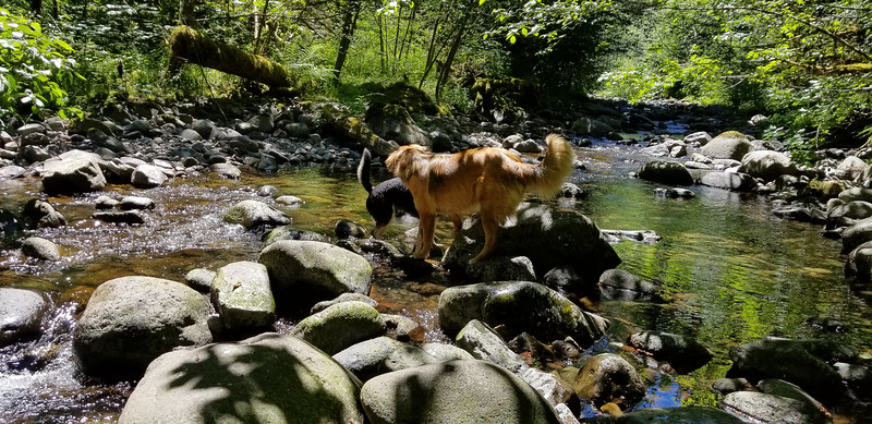 Ollie and Thor playing in Wash Creek