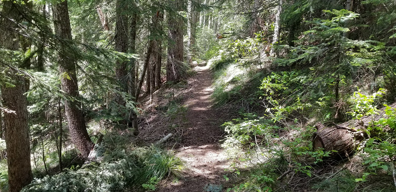 Some of the beatiful trail on the Bull of the Woods trail