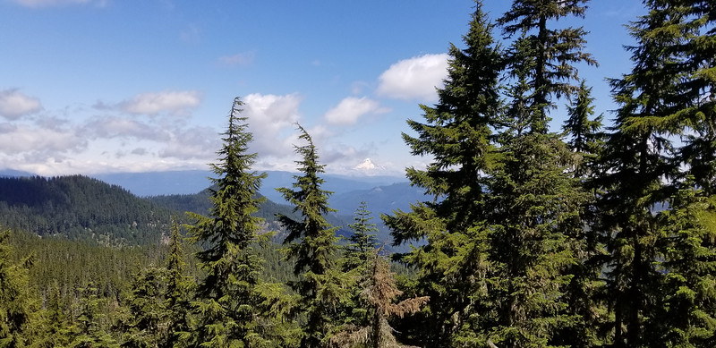 Mt Hood hiding in the clouds on the Bull of the Woods trail