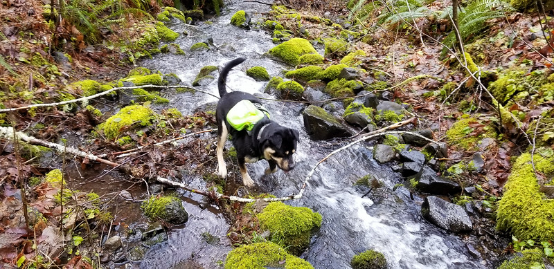 Thor Playing in First Creek