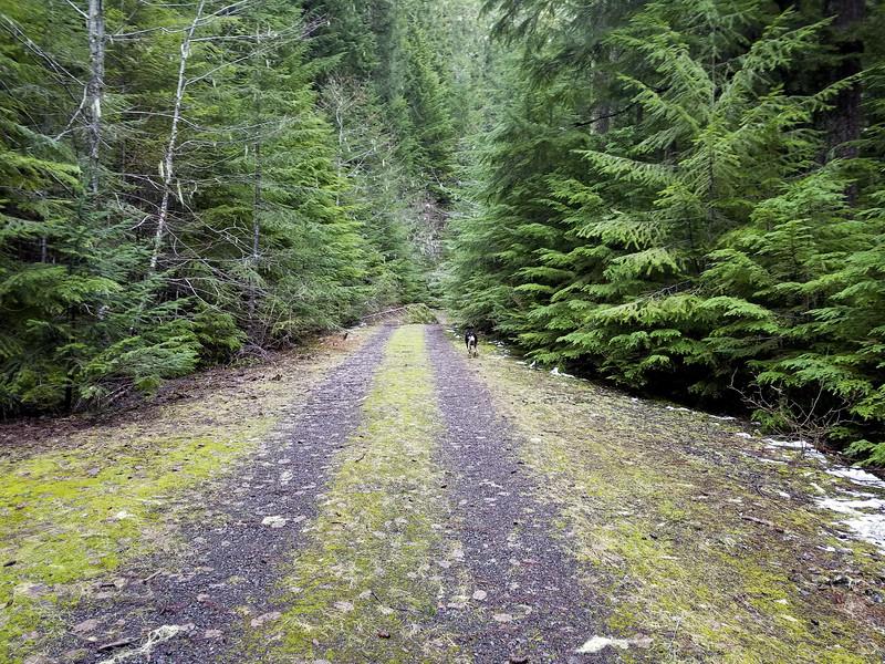 4635-130 Road crossing on Cripple Creek Trail