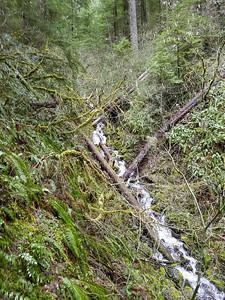 An un-named creek that feeds Cripple Creek