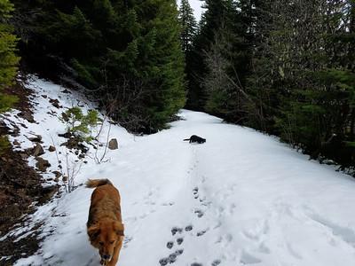 4635 road at Cripple Creek trail crossing