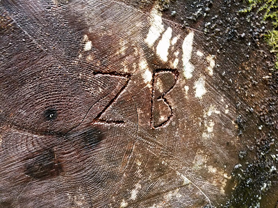 "I wonder who ""ZB"" is?  on Cripple Creek Trail"