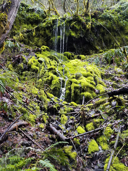 """""""The Grotto"""" on Cripple Creek Trail"""