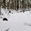 Beginning of one of my  favorite places on the Cripple Creek trail - a nice little grove of large timber in a saddle