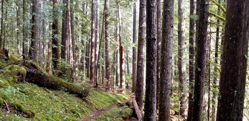 Sun streaming thru the trees on the Dickey Creek Trail