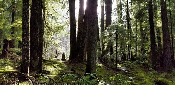 Sun breaking thru the trees on the Dickey Creek Trail