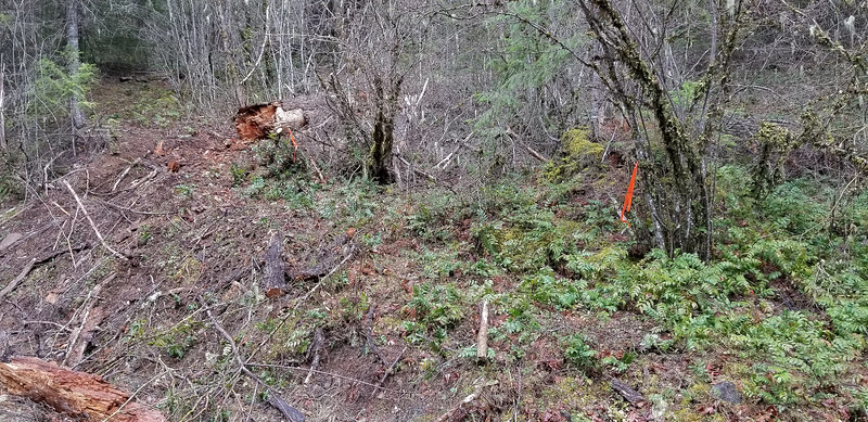 The beginning of the MP3 trail on the 4635 Road - someone has cleared the ramp up to the trail - the downed tree had blocked the ramp previously
