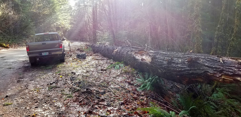 Another shot of the big log at the MP3 Trailhead