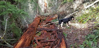 A huge mess on the MP3 trail - we cleaned it up a bit