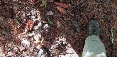 This was a REALLY large pile of scat - I think it was a big kitty - MP3 Trail