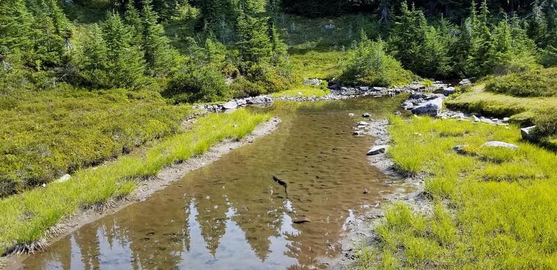 """""""Frog Pond"""" in meadow below Minotaur Lake"""