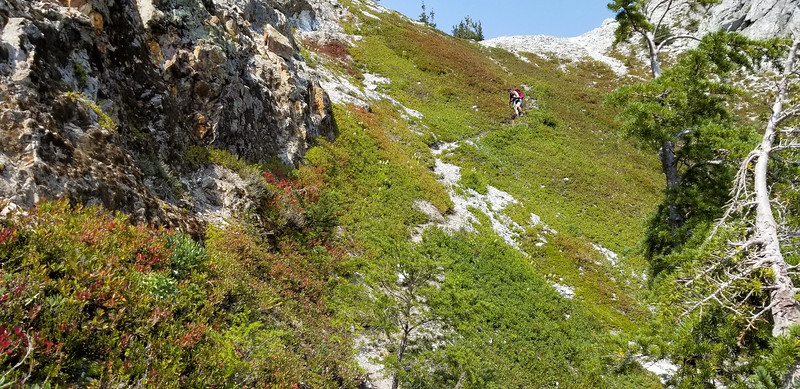 """The """"goat path"""" that led us up to the ridge - it is was much steeper than it looks."""