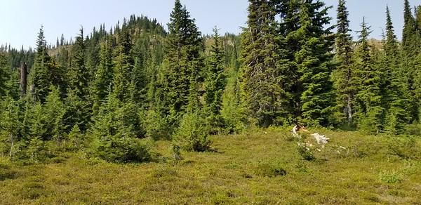 Looking west at un-named peak  in meadow below Minotaur Lake
