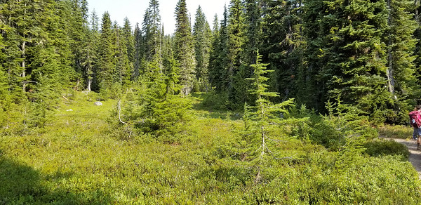 A cool meadow near Minotaur Lake