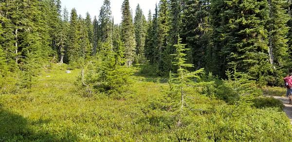 A cool meadow near Minotaur Lake
