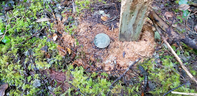 Post marking benchmark on Bagby Trail - just of 6310 road