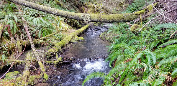 Sluice creek - near where the old Bagby trail crosses it