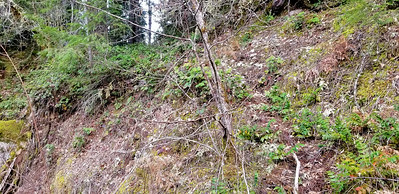 Eroded bank on east side of Collawash river - Old Bagby trail