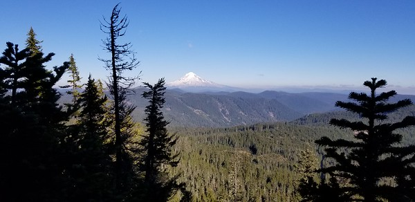 Mt Hood from about the top of Mount Mitchell proper