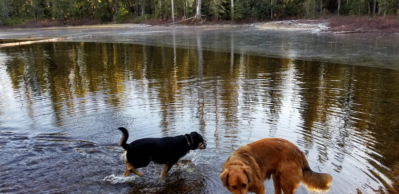 Dogs playing in the COLD water