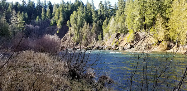 Looking west (upstream) from near the campsite area by the river - Alder Flat Trail