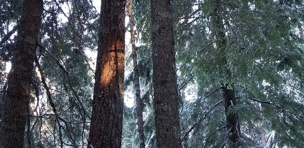 Kirk noticed this - I thought it was kind of cool - a cross shadow on a tree