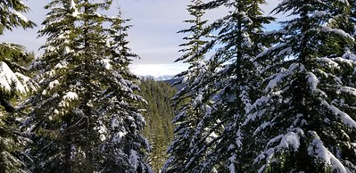 Looking out thru the trees as we approached the top of Squaw Mountain - Mt Hood was still in the clouds