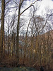 09 Confluence of Potomac & Shenandoah through the trees