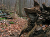 22 Fallen tree_Steep Decent on Old Misery Trail