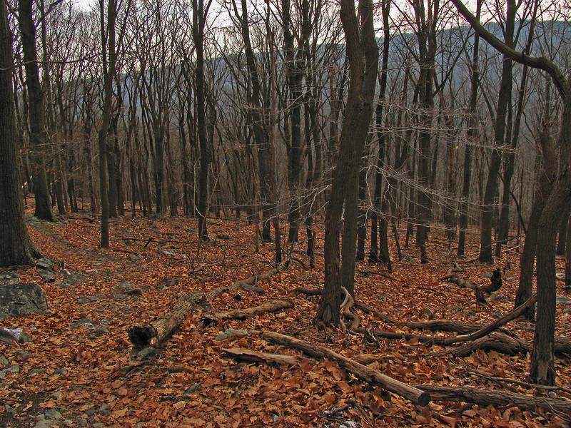 31 Catoctin Mountain Park Trail_decent to park headquarters