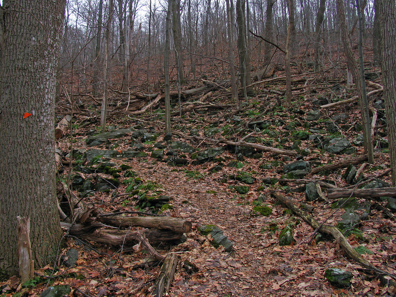 23 Old Misery Trail--orange blaze_many fallen trees