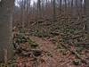 23 Old Misery Trail--orange blaze_many fallen trees