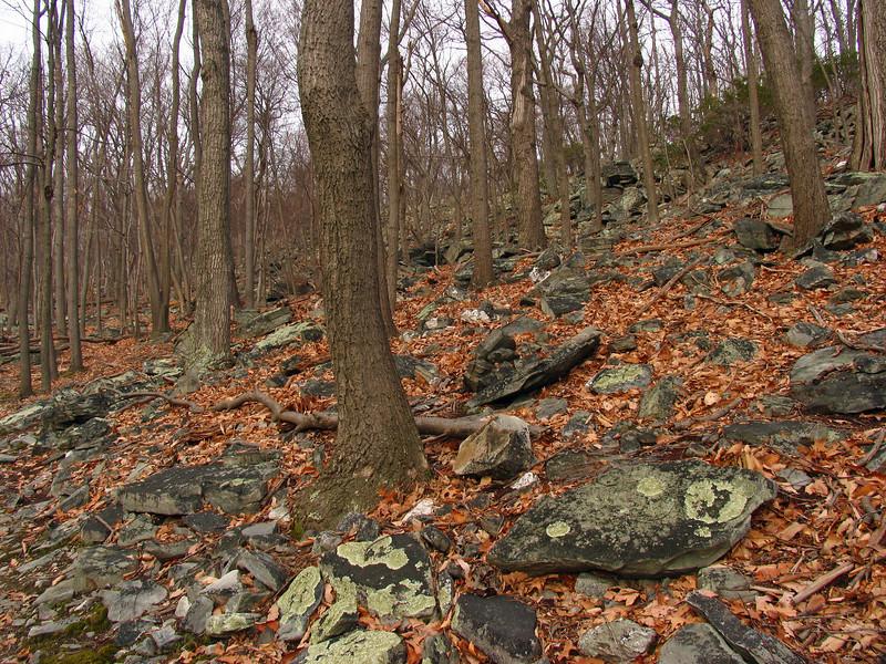 32 Catoctin greenstone_Catoctin Mountain Park trail
