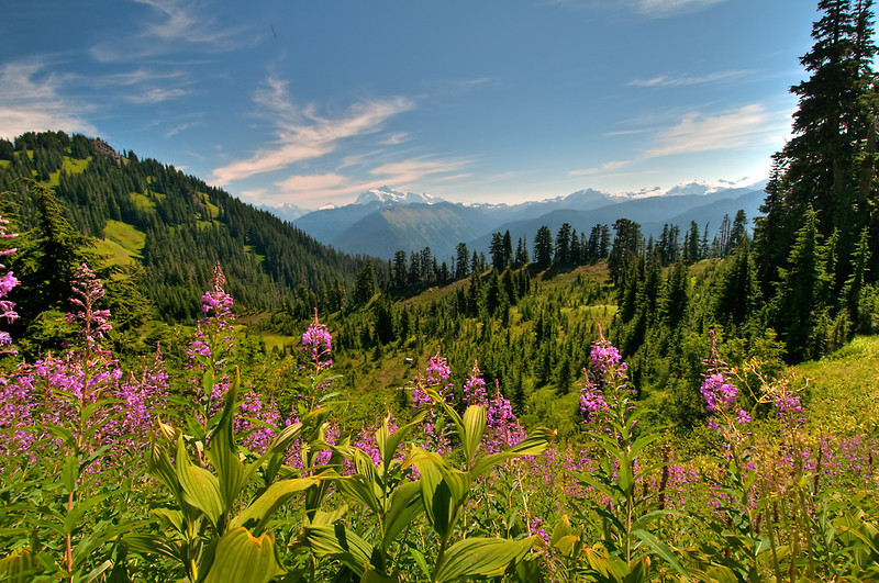 As you head up Church Mountain the views begin to open up and the wildflowers explode.