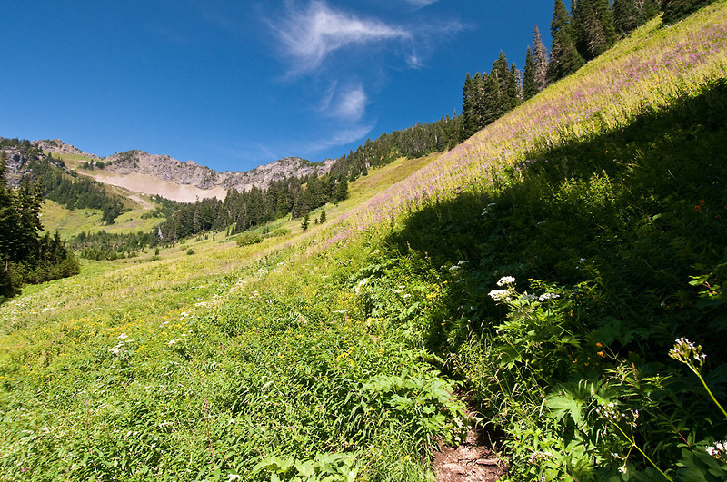 Your first view of the ridgeline and open meadow at about 4,850 feet, 2,500 feet of elevation gain to here.