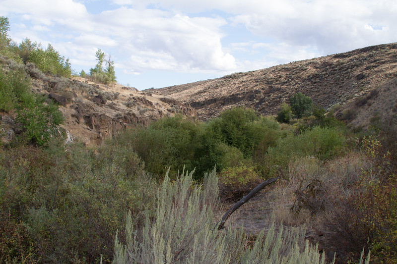 Cowiche Canyon