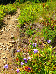 More wildflowers by the trail on the way down.