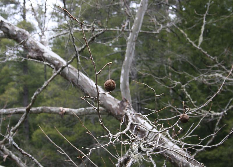 3/6/09 - Seed Pod