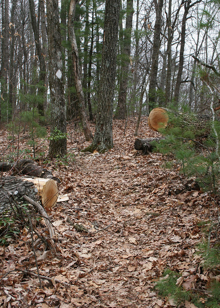3/6/09 - These trails are well maintained.  You can see where a fallen log has been cut.