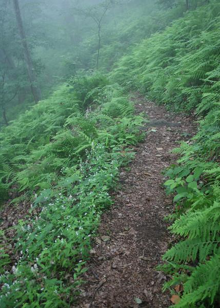 Fern along the trail