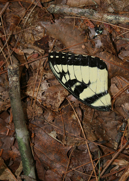 A butterfly wing we saw along the trail