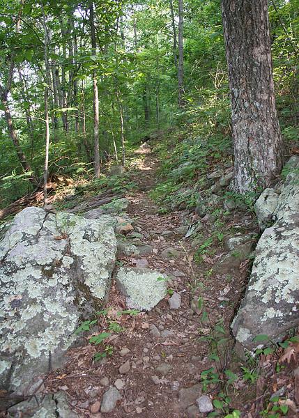Lichen on rocks along trail