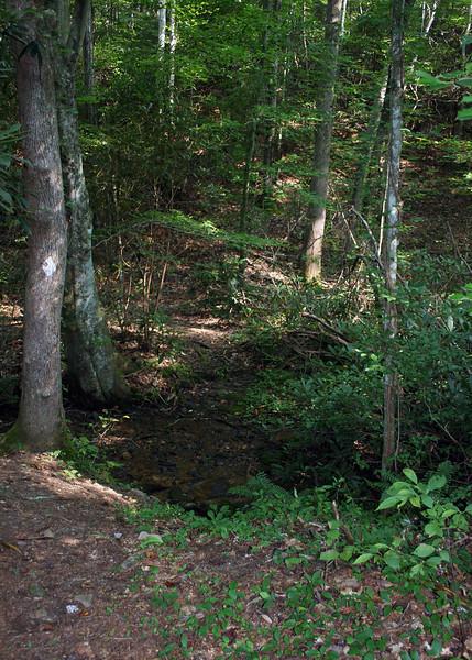 North Fork of Laurel Creek