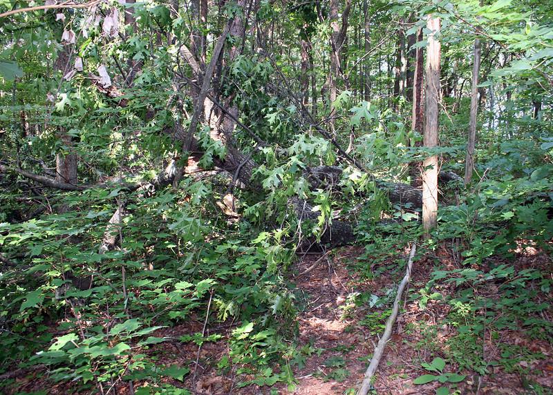 A tree had fallen across the trail