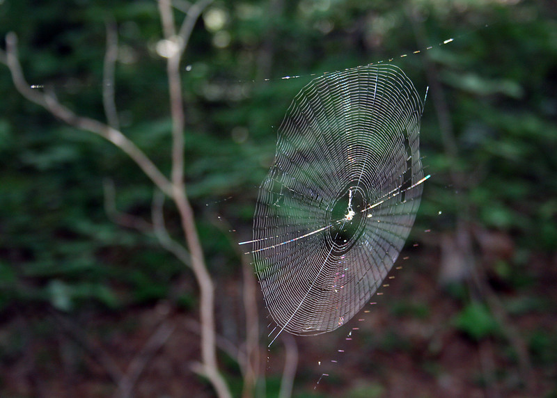 A beautiful spider web